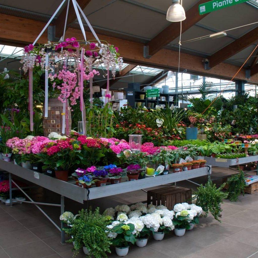 Fiori e piante per il giardino garden bedetti como - Piante per il giardino ...