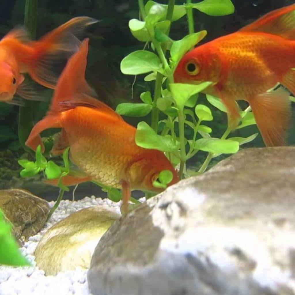 Zoo garden a cant provincia di como garden bedetti como for Vendita pesci