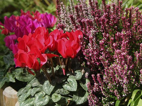 Balconi fioriti garden bedetti como for Piante da esterno in vaso perenni