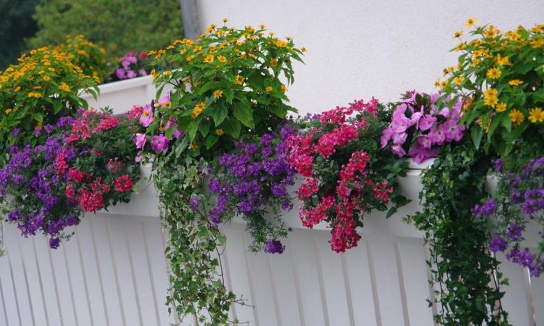 Balconi fioriti garden bedetti como - Fiori da giardino primavera estate ...