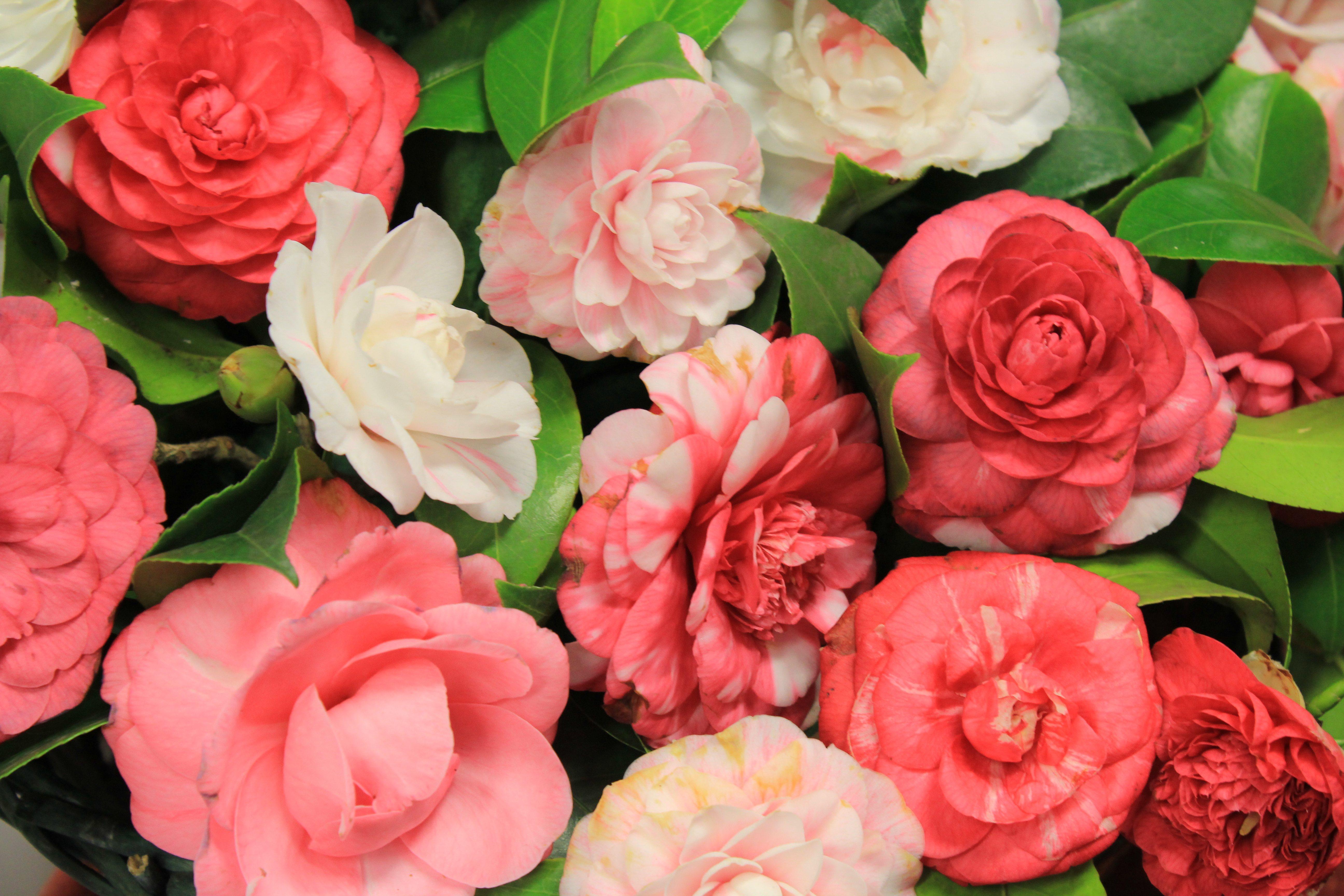 Fiori Che Amano Il Sole quali fiori piantare in primavera? | garden bedetti como