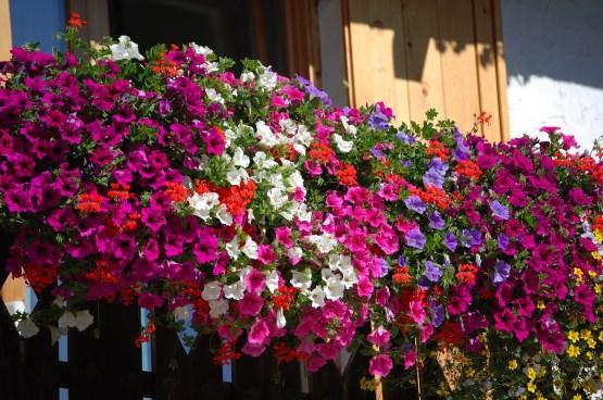 Preparare Aiuole E Balconi Per La Primavera Ed Estate Garden